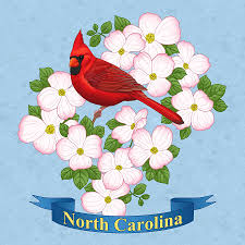 north carolina state bird and flower painting by crista forest