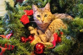 cat christmas cat names