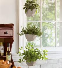 hanging plants indoor ergonomic and stylish indoor