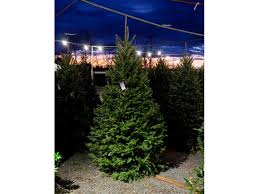 fresh cut christmas trees strange u0027s florists greenhouses u0026 garden