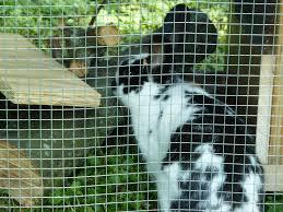 Kims Rabbit Hutch Bunnies Our Little Farm
