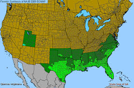 us map searcy arkansas live oak quercus virginiana species details and allergy info