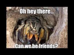 Spider Meme Misunderstood Spider Meme - 23 funny spider memes weneedfun