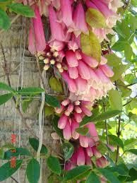 Fragrant Plants Florida Riverland Nursery Blog Florida