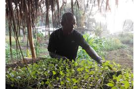 Benefits Of Urban Gardening - sharing the economic benefits of urban agriculture liberian observer