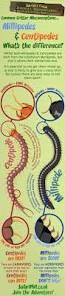 best 25 centipedes ideas on pinterest childrens stickers