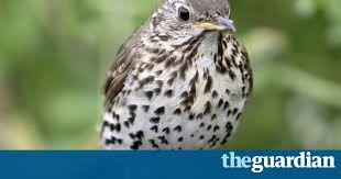 The Blind Owl Sparknotes Poem Of The Week The Darkling Thrush By Thomas Hardy Books