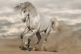compare prices on horses running poster online shopping buy low