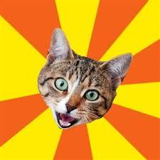 Cat Memes Generator - bad advice cat meme generator imgflip