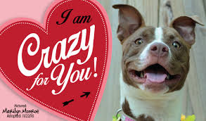 A Happy Valentine Will The by Honor Someone Special This Valentine U0027s Day And Help Homeless Pets