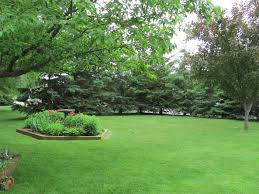 small trees for landscaping garden design