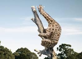 Drunk Giraffe Meme - giraffe crossing road drunk meme crossing best of the funny meme