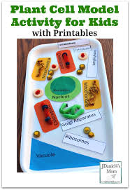 best 25 plant cell model ideas on pinterest cells activity
