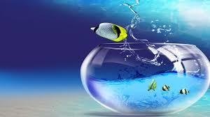 Desktop Hd Free Pictures Animals Animals Fish 3d Desktop Hd Free Wallpapers For Desktop Hd Wallpaper