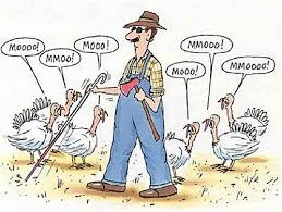 Thanksgiving Meme Funny - 20 funny thanksgiving day photos comics and memes