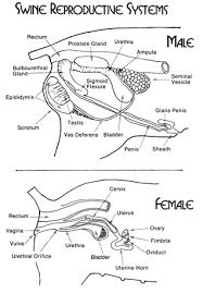 Female Sexual Anatomy Pictures Friday Weird Blogging U2013 Corkscrewing U2013 A Blog Around The Clock