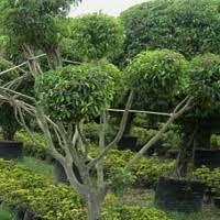 fourniture de bureau montpellier végétal peut rimer avec achat local achatpublic info
