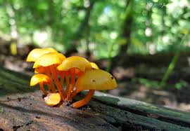 hidden treasures fungi in the parks