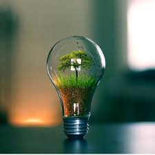 photography photoshop tree in lightbulb bulb photo by