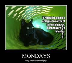 Funny Monday Meme - funny monday cat meme bajiroo com