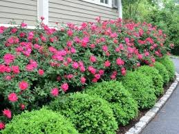 landscaping ideas flowers garden design with great landscaping