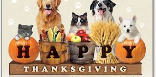 happy thanksgiving willow animal hospital