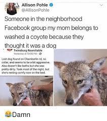 Lost Dog Meme - 25 best memes about lost dog lost dog memes