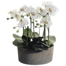 Silk Flower Plants - silk flowers u0026 plants santa barbara design center santa
