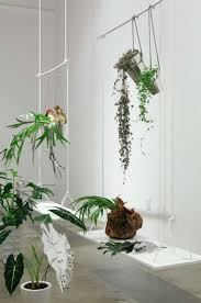 79 best h u0026g kamerplanten images on pinterest indoor plants