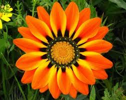 flowers images beautiful colorful flower photos nature babamail