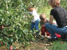 where to go apple picking around tiverton and little compton