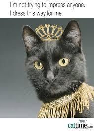 Cat Facts Meme - 31 best cat meme images on pinterest kittens cat facts and cat