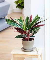low light houseplants plants that don t require much light 10 houseplants that don t need sunlight houseplants plants and