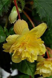 101 best i love yellow flowers images on pinterest flowers