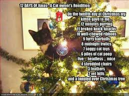 Christmas Cat Memes - 186 best christmas cats images on pinterest christmas animals