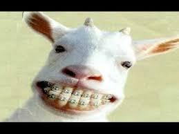 imagenes graciosas videos videos graciosos videos de risas muy graciosos 2016 noticias