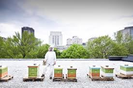 16 reasons beekeeping is awesome and why you should do it too