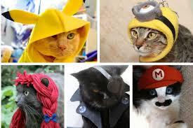Halloween Costumes Cats Wear 20 Super Diy Costumes Cats Cuteness