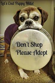 boxer dog sayings 629 best boxer dog stuff images on pinterest boxers animals and