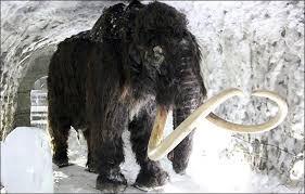 initial stage reached dream cloning woolly mammoth ancient