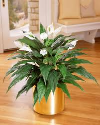 realisitic artificial flowering plants at officescapesdirect