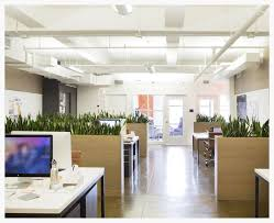 plant for office meet the startup designing breathtaking office plant displays for