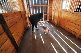 open house planned for quest stables for rescued animals rebuilt