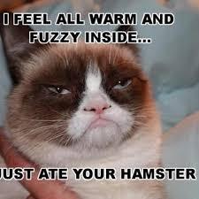 Grumpy Cat Christmas Memes - grumpy cat lessons tes teach