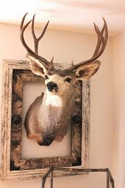 Christmas Decorations For Deer Mounts by Well I Know I U0027ll Be The Who Will Need To Decorate Around Deer