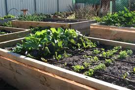 where do i start planning a vegetable garden