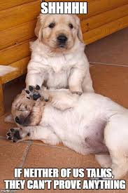 Funny Puppy Memes - funny puppies pictures gendiswallpaper com