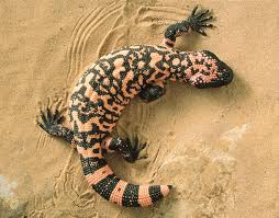 10 deadly animals that could fit in your breadbox britannica com