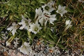 native san francisco plants list of california native plants wikiwand
