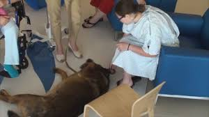 lawyer takes therapy dog to children u0027s hospital youtube